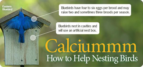 Calcium for Nesting Birds
