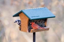 Quality bird feeder